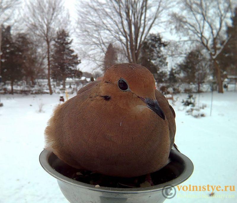 Интресные фотографии попугаев - 1482474340149154012.jpg