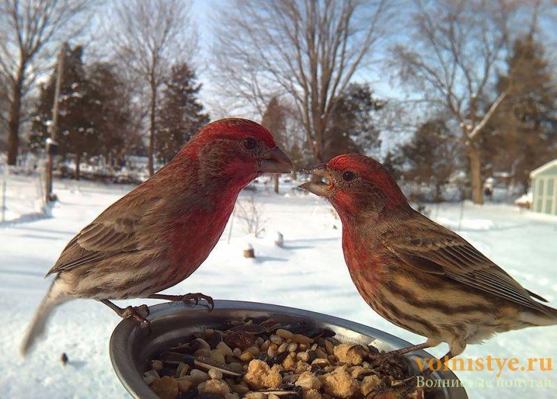 Интресные фотографии попугаев - 1482474342118796565.jpg