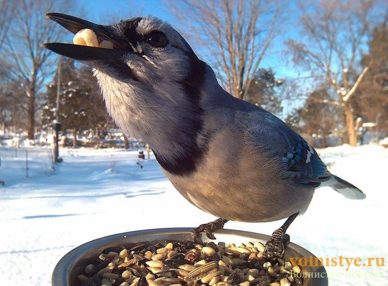 Интресные фотографии попугаев - 1482474344195714789.jpg