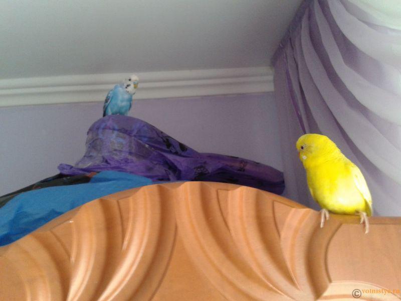 Это они двое на шкафу сидят,не помню когда - 20140418_121920.jpg