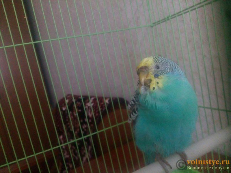 нужна очень консультация орнитолога, заболел попугай. - XkYhQBEqUVE.jpg