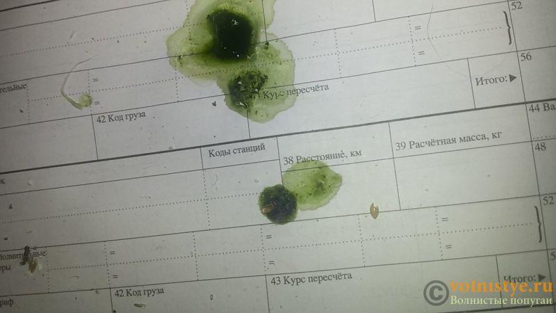 Зеленый помет с водой-2 - 20170211_003834.jpg