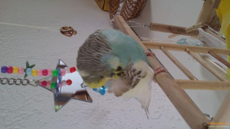 Как сделать ингаляцию и обогреть больную птицу... - 14889727040611692918241.jpg