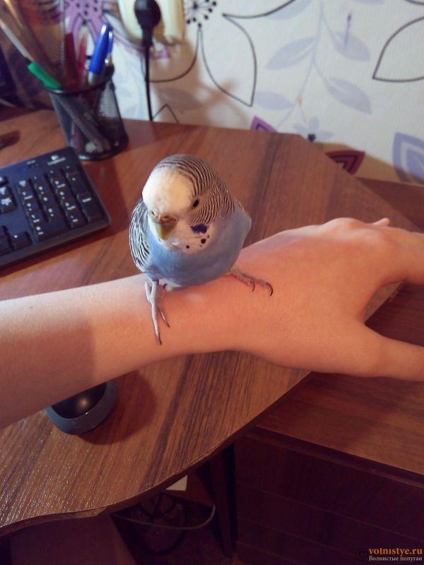 У попугая стала коричневой восковица. - IMG_20170314_193428.jpg