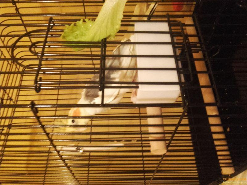 Попугай Корелла не ест 4 день с момента покупки - 20170322_194955.jpg