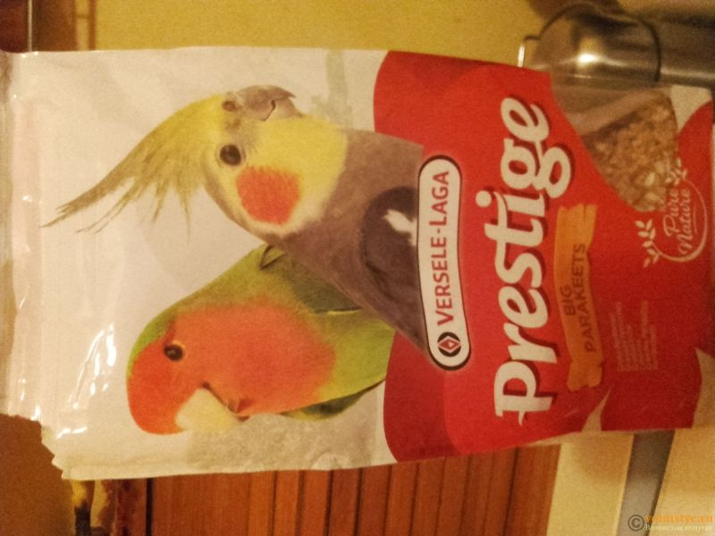 Попугай Корелла не ест 4 день с момента покупки - 20170322_195422.jpg