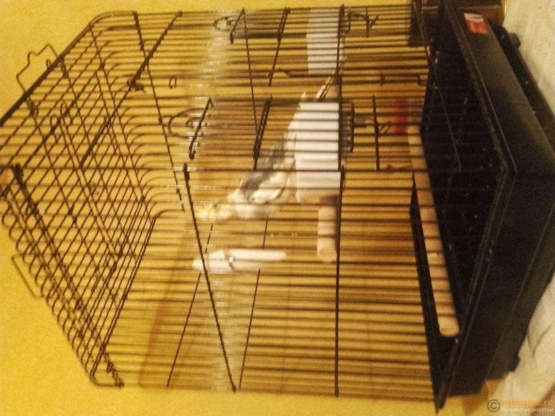 Попугай Корелла не ест 4 день с момента покупки - 20170322_195533.jpg