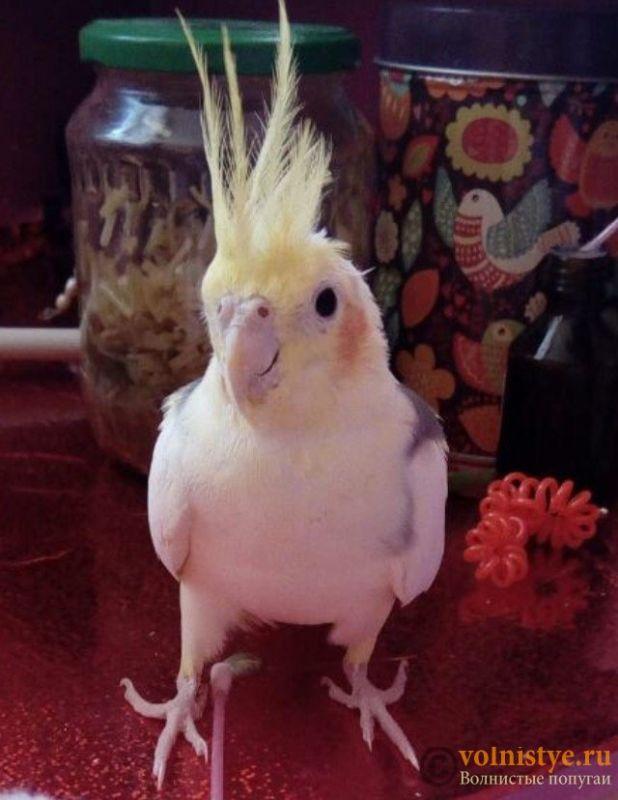 Уже 2 недели у нашей птички жидкий стул ((( - FullSizeRender-02-04-17-02-53-2.jpeg