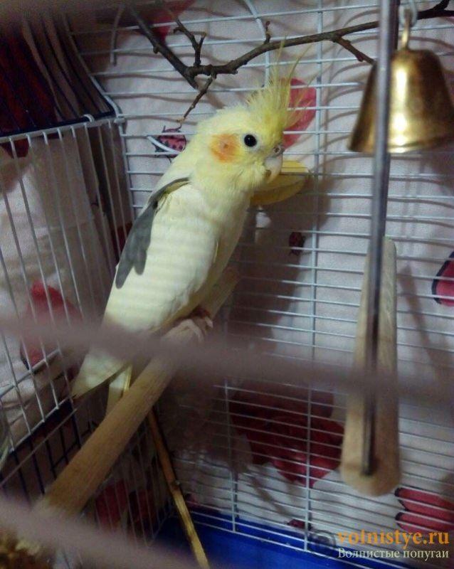 Уже 2 недели у нашей птички жидкий стул ((( - FullSizeRender-02-04-17-02-53-3.jpeg