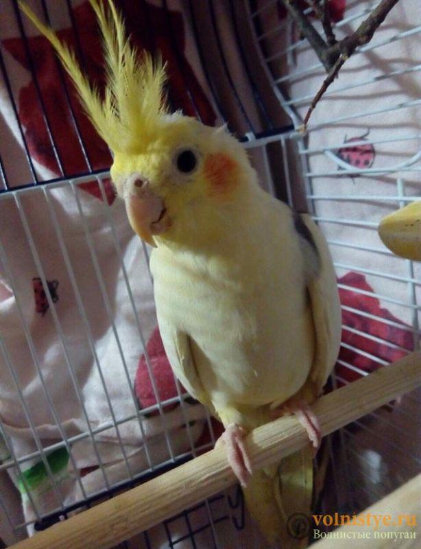 Уже 2 недели у нашей птички жидкий стул ((( - FullSizeRender-02-04-17-02-53-4.jpeg