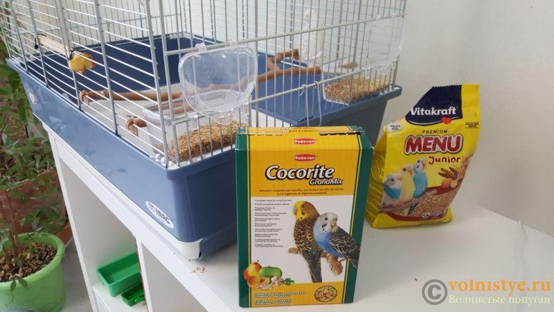 Смена и подбор корма для волнистого попугая - image4367.jpeg