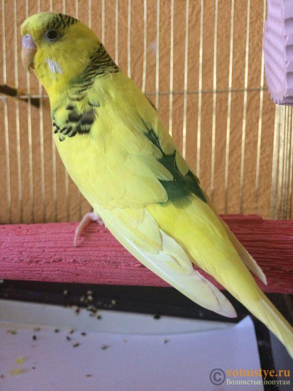 Попугай приболел - 85I1VHoMIXw.jpg