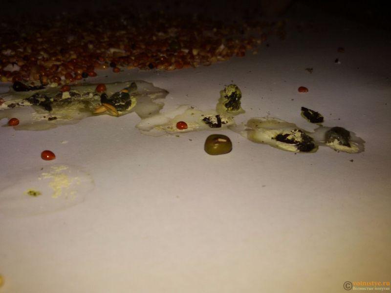 Травма лапы у волнистого попугая-2 - 20170416_214243.jpg