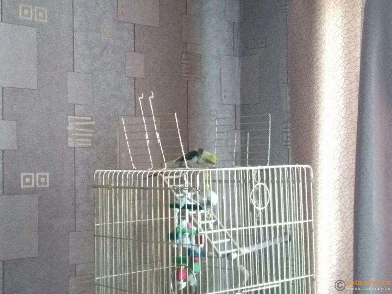 Птица не ориаентируется в пространстве? - 1UiTtZoFs9U.jpg