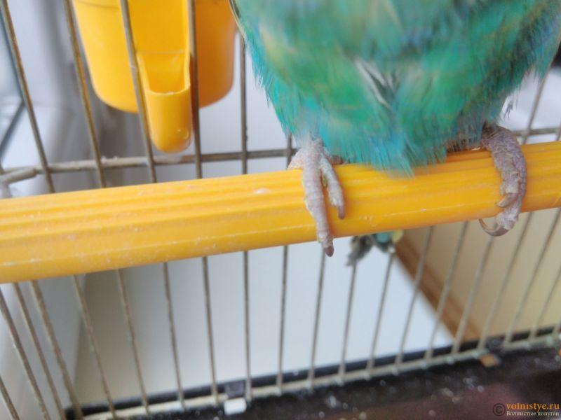 Подозрение на клещ у волнистого попугая - IMG_20170418_141811.jpg