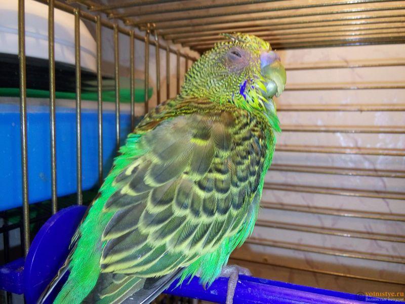 Простуда у волнистого попугая - 20170419_141922.jpg