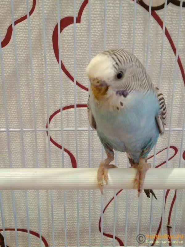 Как не навредить птице при лечении от клеща? - 9bw02yGbYTk.jpg