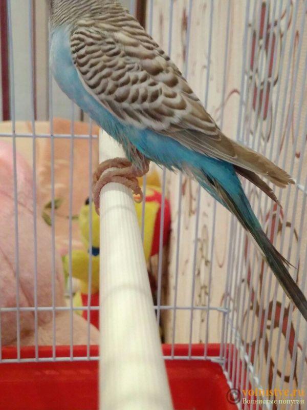 Как не навредить птице при лечении от клеща? - _s3ze80KdpQ.jpg