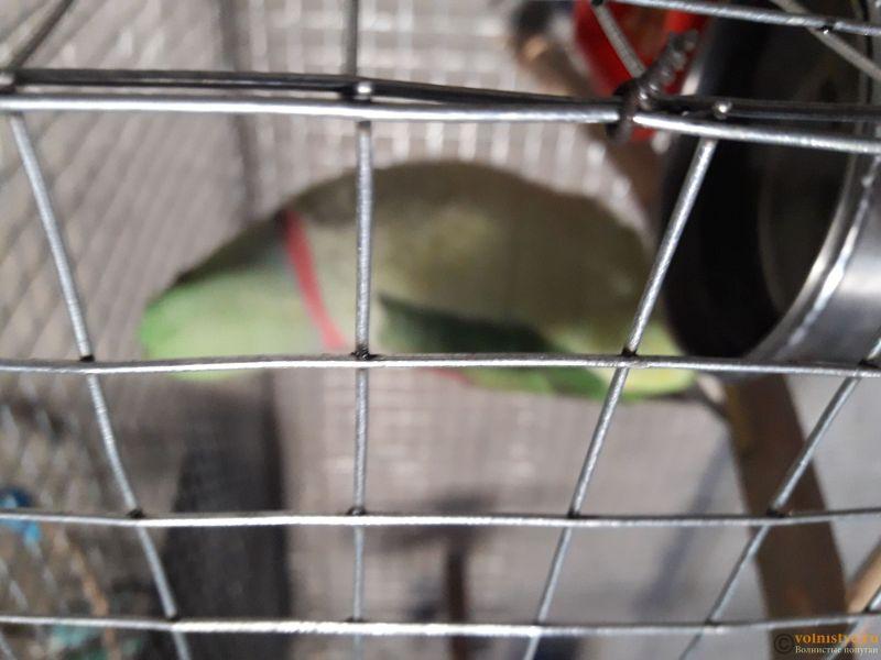 Попугаи и сами неплохо купаются, поставьте им чашку