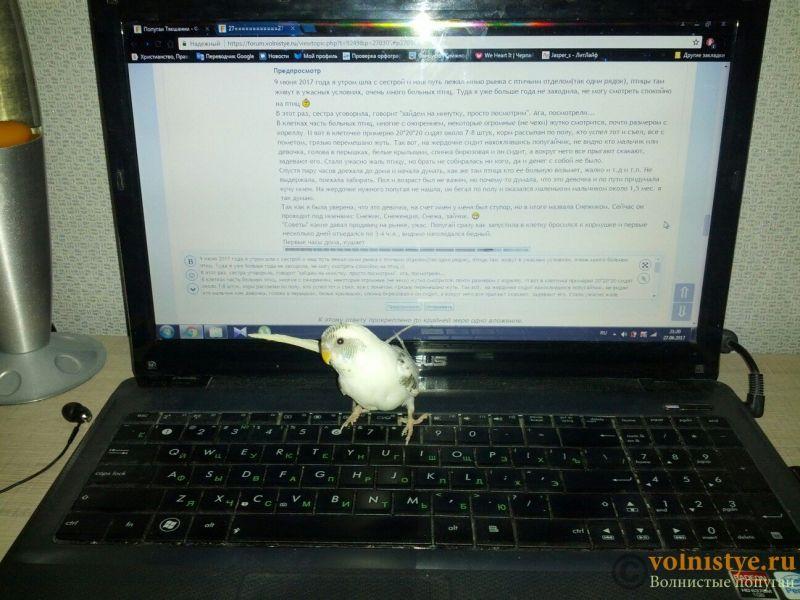 Попугаи Тякшанни - Jq_vAQXLA7w.jpg