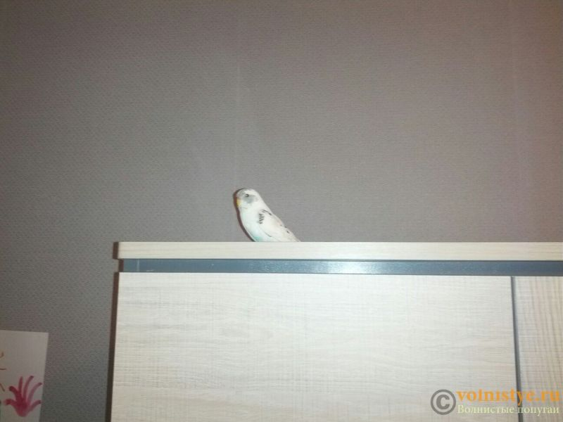 Попугаи Тякшанни - CjozQs9zVy4.jpg