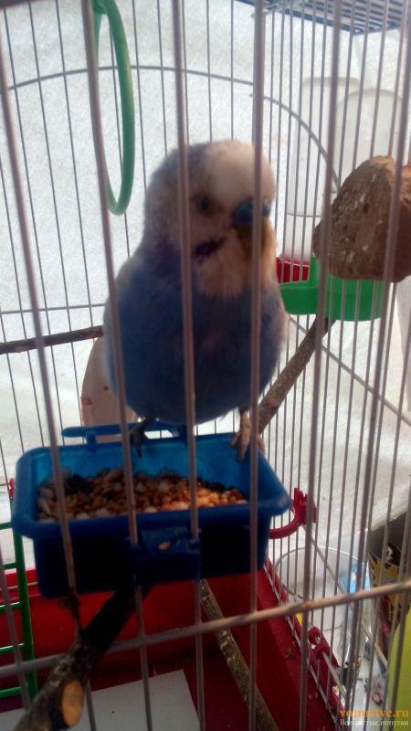 Заболел попугай - DSC_0296.jpg