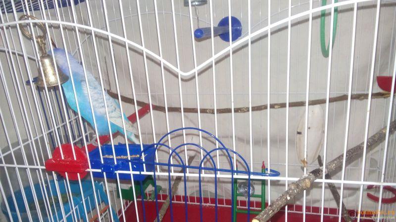 Заболел попугай - DSC_0295.jpg