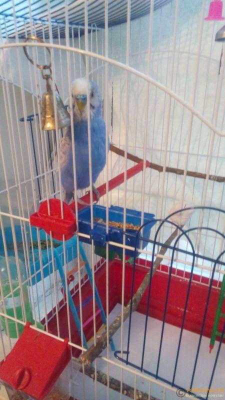 Заболел попугай - DSC_0297.jpg