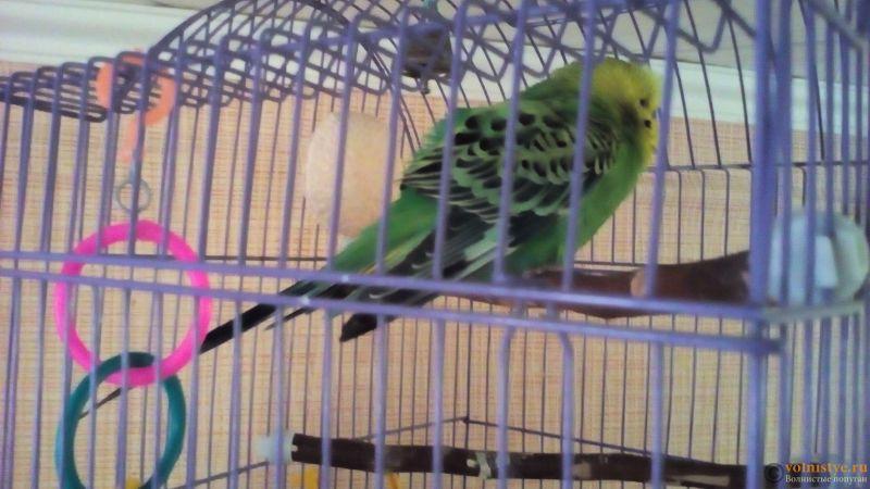 У попугая понос - 20170812_084314.jpg