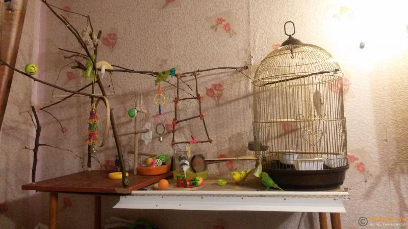 Игровая площадка для волнистого попугая своими руками - 20161231_193235[1].jpg