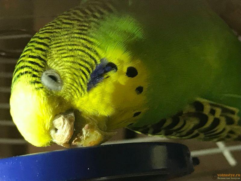 Попугай болен !!! - IMG_8529-03-10-17-10-30.JPG