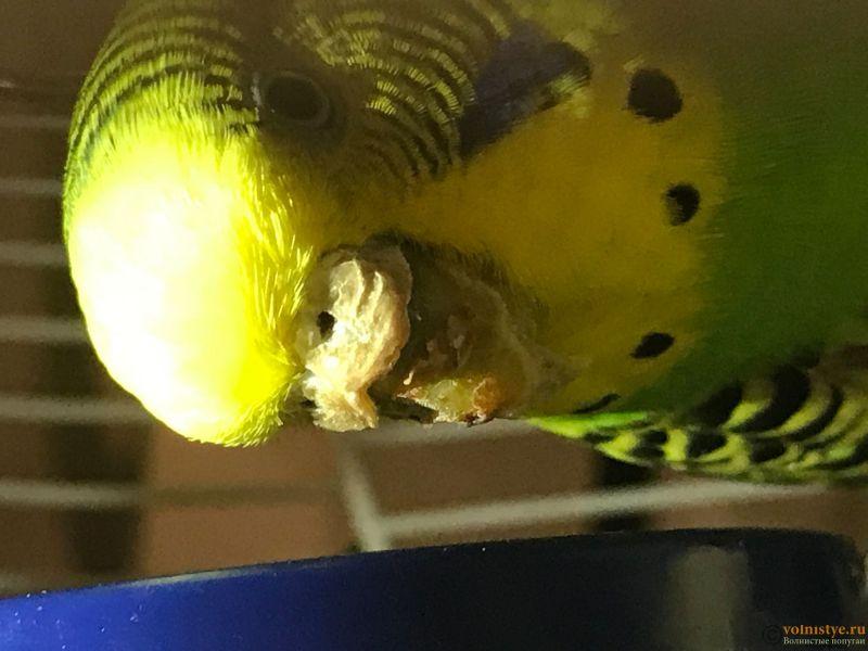 Попугай болен !!! - IMG_8532-03-10-17-10-30.JPG