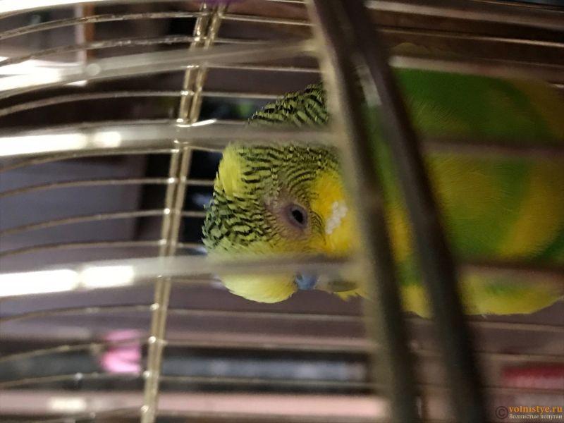 Проблема с глазом у волнистого попугая - IMG_1208.jpg