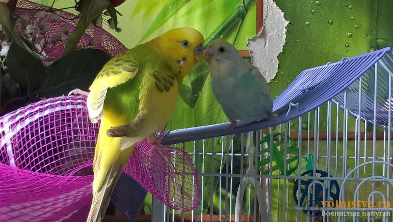 Самец и самка - родители - -TwmQ72BYr8.jpg