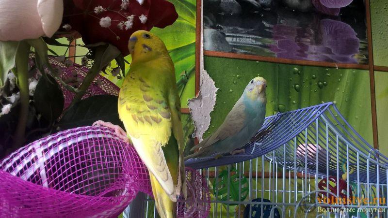 Самец и самка - родители - 1Sq4MNor8sk.jpg