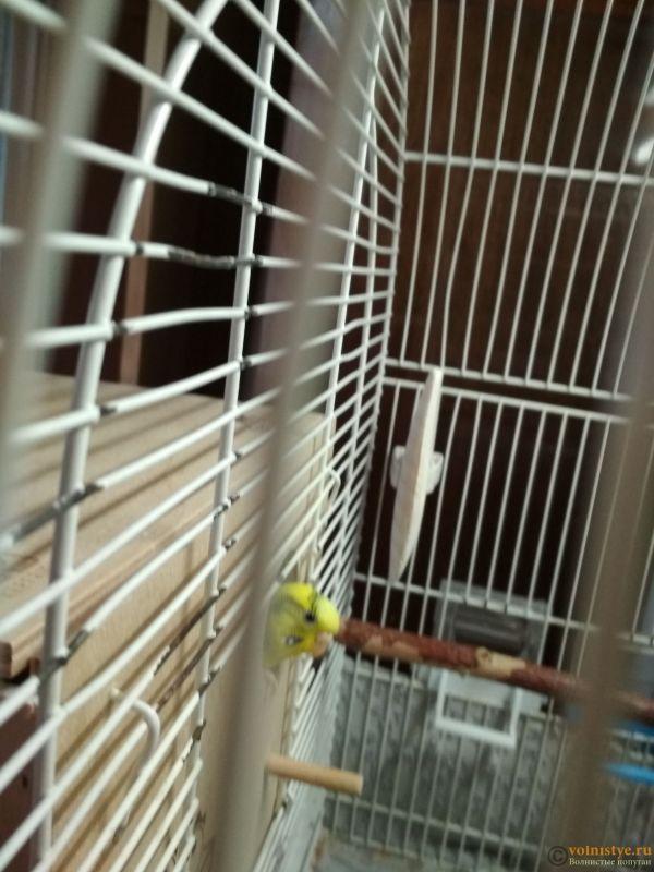 Гнездование Чеши и Златы - IMG_20171105_121655.jpg