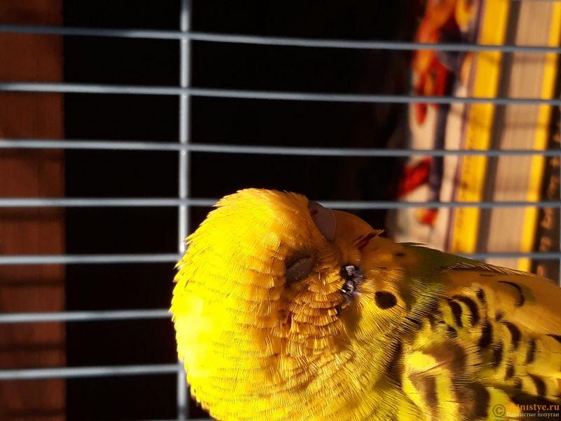 Попугай постоянно дрожит и спит - 20180104_122757.jpg