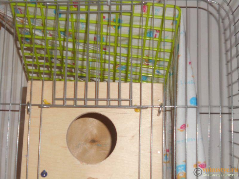Гнездование Киры и Цуката - DSCN2189.JPG