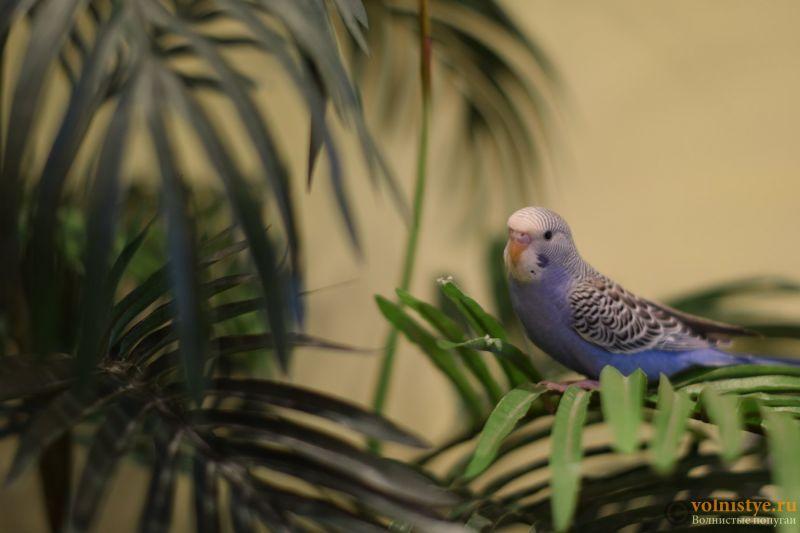Первые дни дома. Приучение попугая к рукам. - DSC_2081.JPG