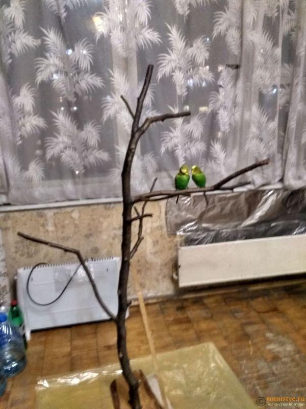 Наше золотое дерево - IMG_20180108_185401_HDR.jpg