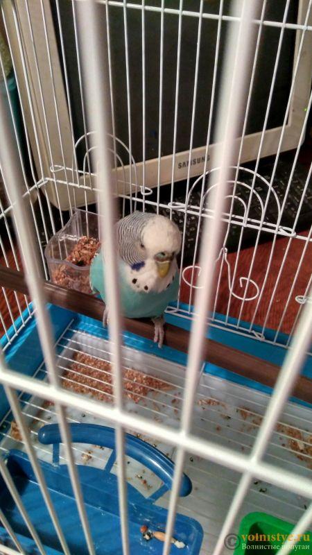 У попугая стала коричневой восковица. - bzyo88tEVQk.jpg