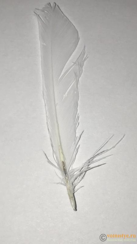 У попугая крылья торчат - IMG_2334.PNG