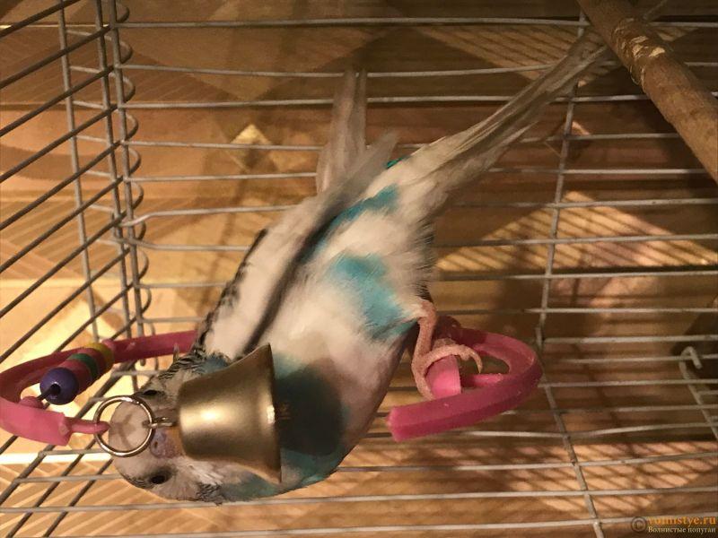 У попугая крылья торчат - IMG_2338.jpg