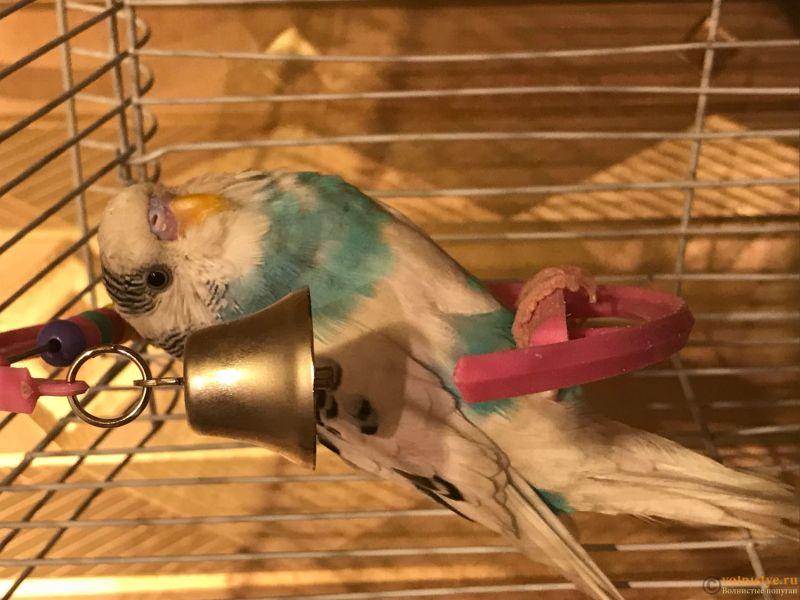 У попугая крылья торчат - IMG_2347.jpg