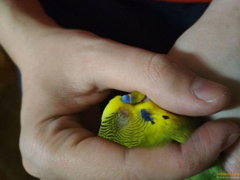 Проблема с глазом у волнистого попугайчика. - tFYz0qA6d3s.jpg
