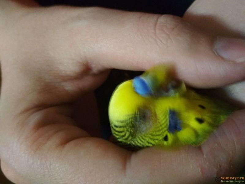 Проблема с глазом у волнистого попугайчика. - vw6rU4jXrcs.jpg