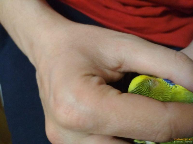 Проблема с глазом у волнистого попугайчика. - wNEhEUg6WmY.jpg