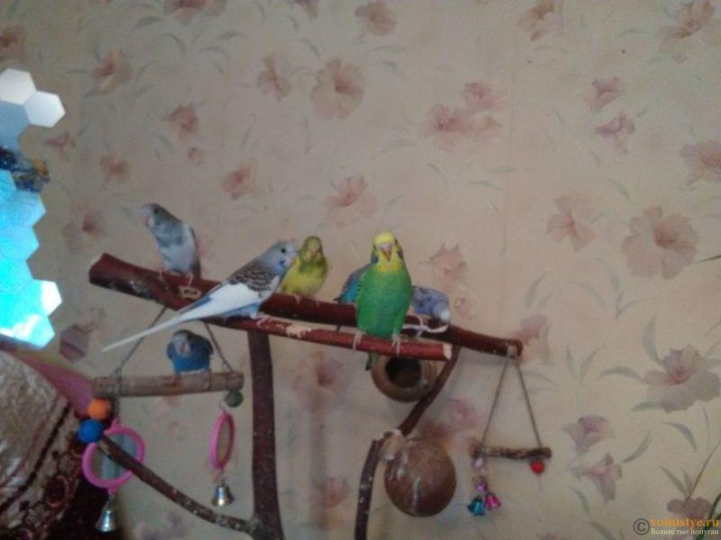 Волнистые попугайчики. САО Москва. - IMG_20180304_102647.jpg