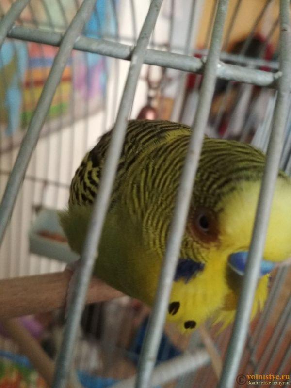 Проблема с глазом у волнистого попугайчика. - Dcmaa4IyBVM.jpg