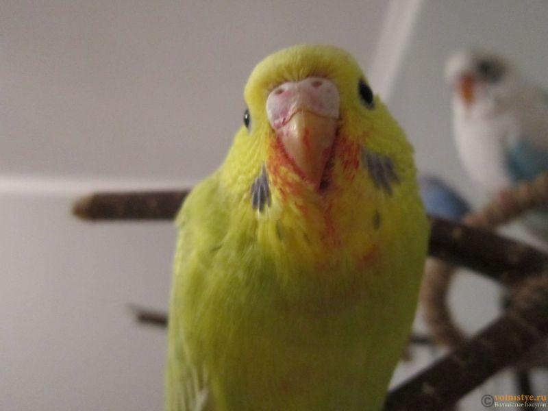 Попугаи Тякшанни - IMG_3745.JPG